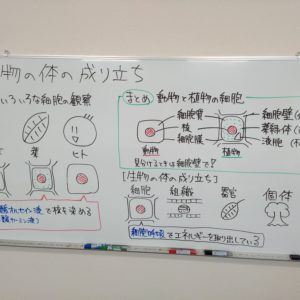 "<span class=""title"">【授業動画】生物の体と細胞</span>"