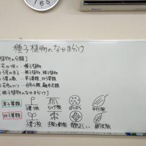 "<span class=""title"">【授業動画】種子植物のなかま分け</span>"