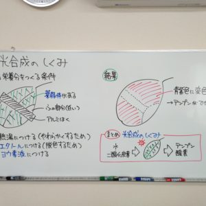 "<span class=""title"">【授業動画】栄養分を作るしくみ</span>"