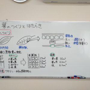 """<span class=""""title"""">【中学理科】葉のつくりとはたらき</span>"""