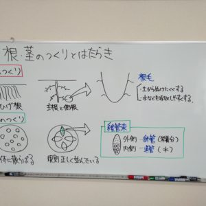 "<span class=""title"">【授業動画】根・茎のつくりとはたらき</span>"